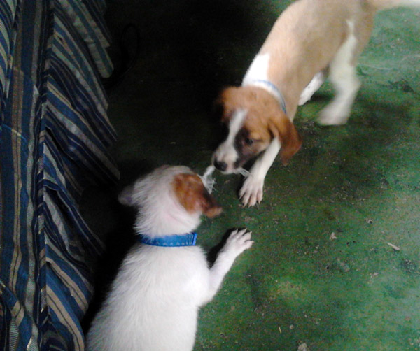 Here they are fighting over a bit of torn plastic